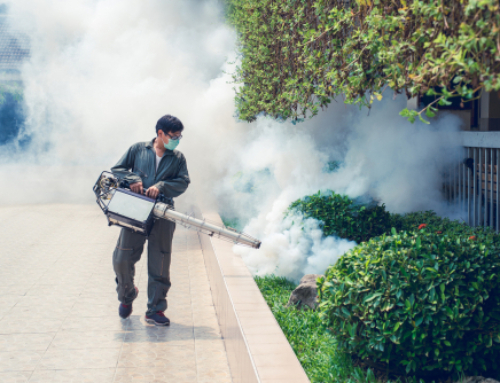 Mosquito Control in Summer – Seven Tips to Make Your Life Easier