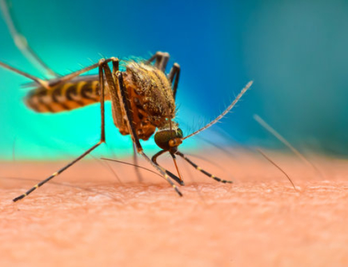 Can Pest Control Make Mosquito-Borne Diseases a Thing of the Past?